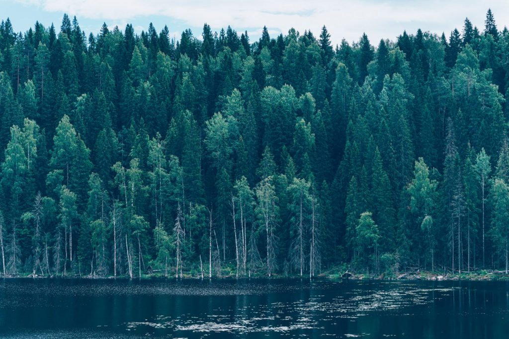 Majestic forest and picturesque river northern scenic environment Karelia